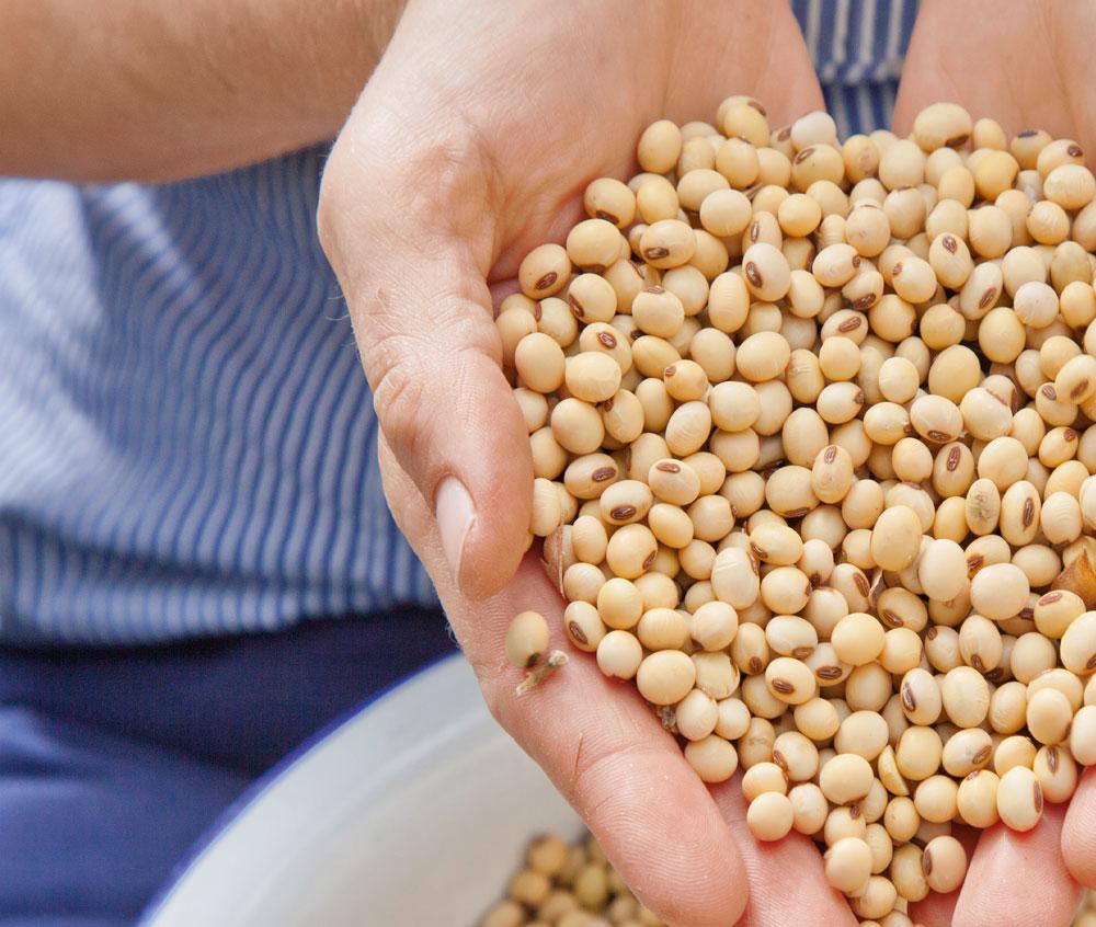 Soja aus Bayern: In der Küche der Sojabäuerin